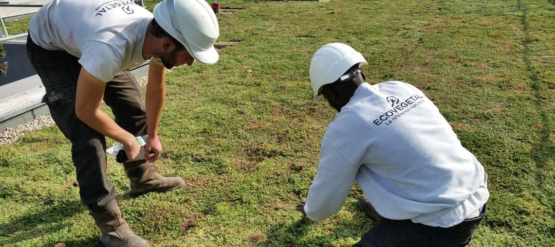 emplois ecovegetal