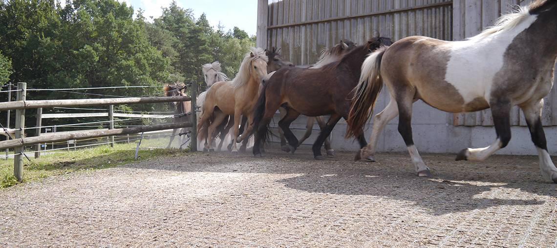sols equestres ecovegetal - actus