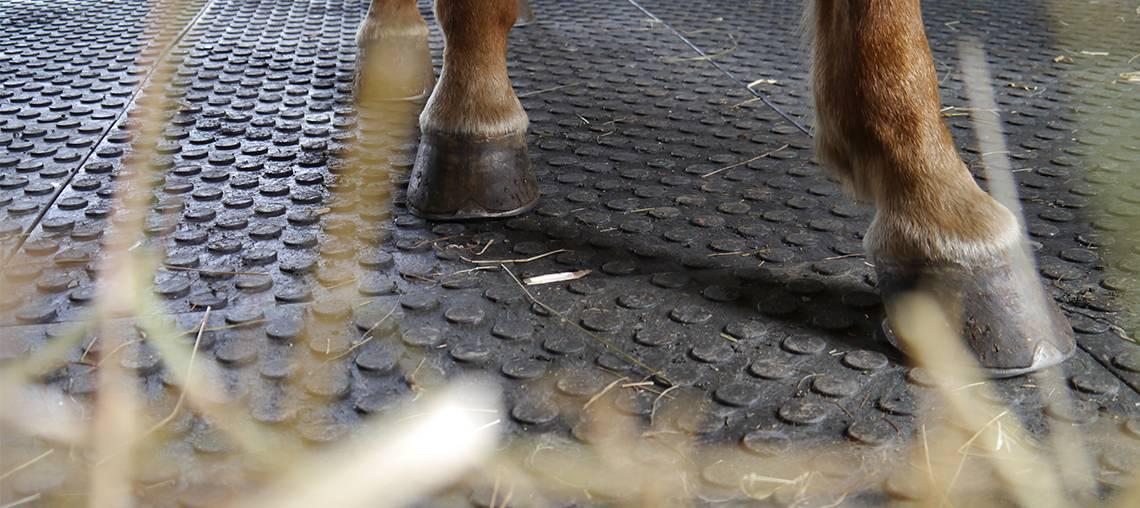 tapis pvc sols equestres
