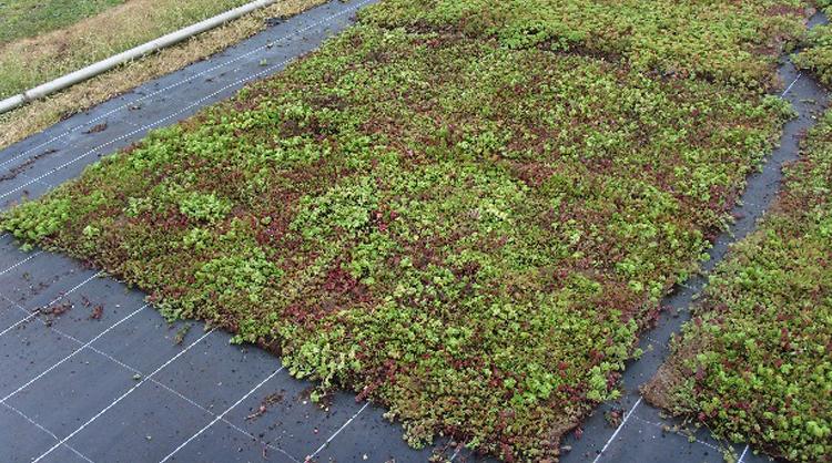 Ecovegetal un syst me de v g talisation extensive simple - Tapis chauffant pour plante ...