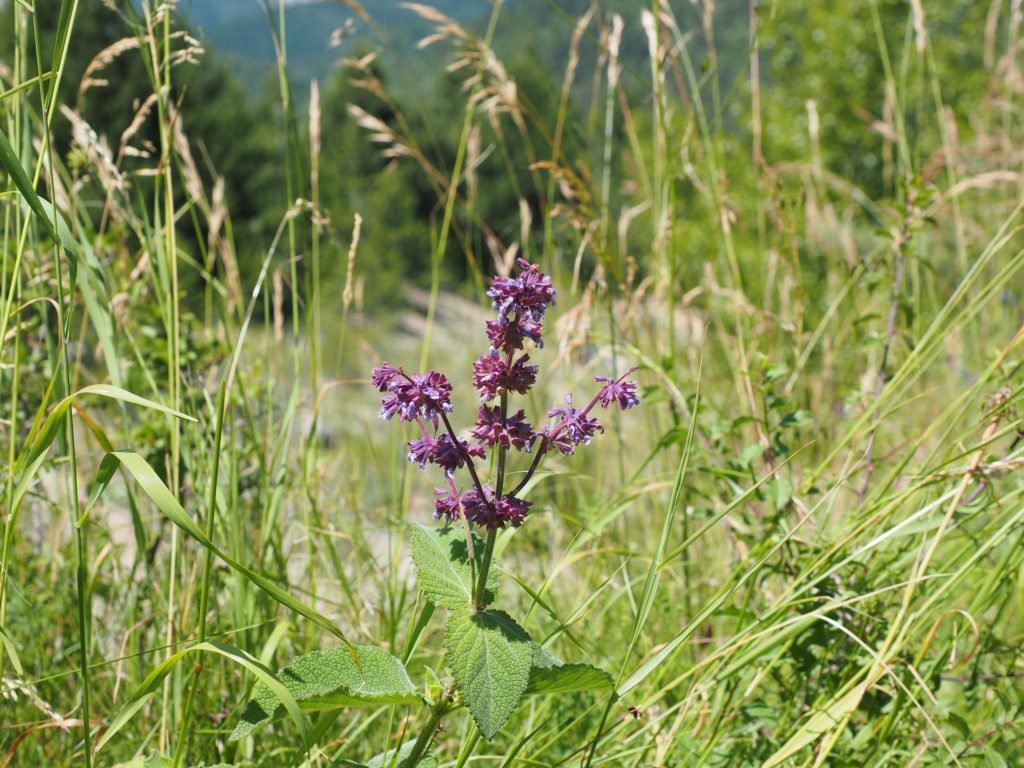 Plante herbacée définition