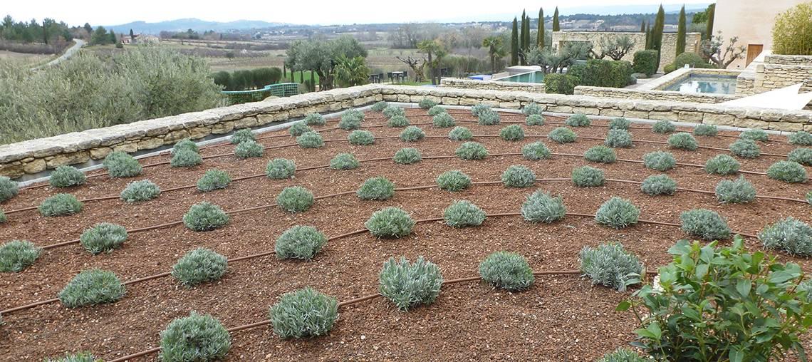 irrigation des toitures végétalisées