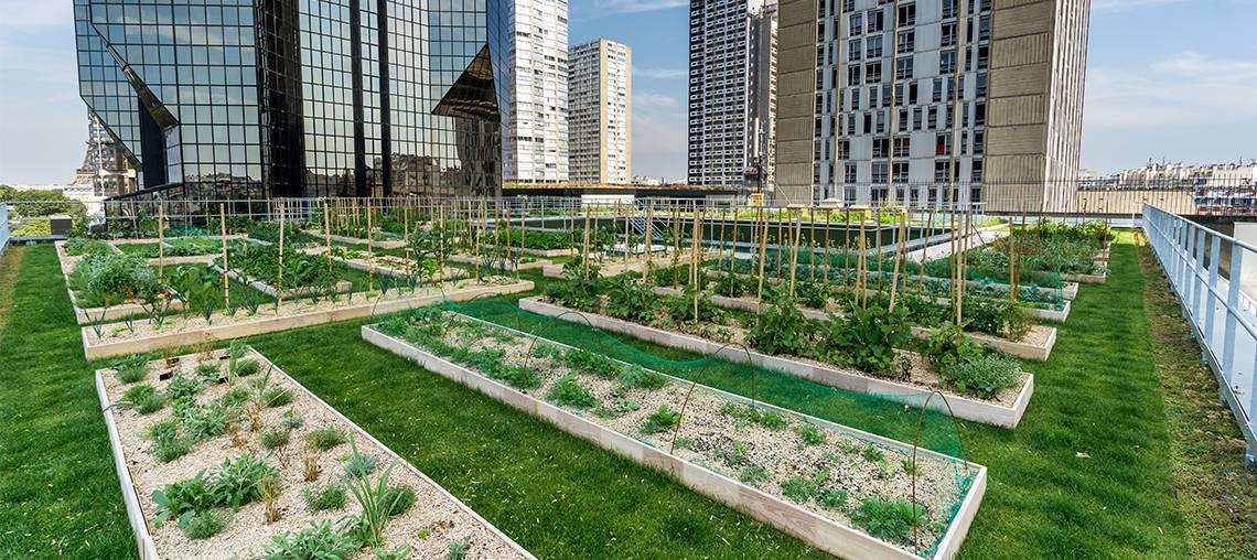 ECOVEGETAL : faites de votre toit un jardin potager urbain