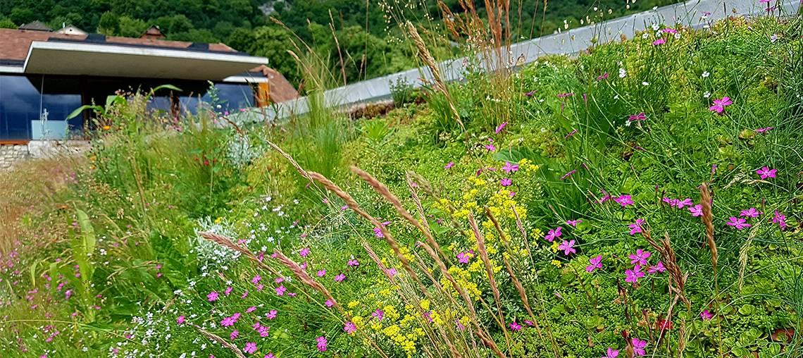 toiture végétale prairie fleurie