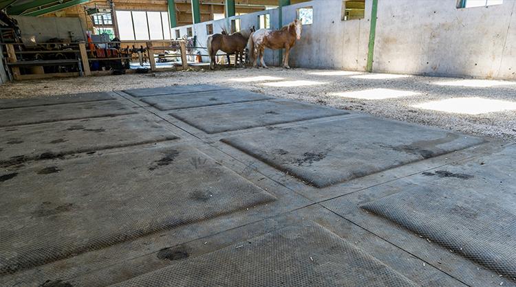 stabilisation des sols d'écurie