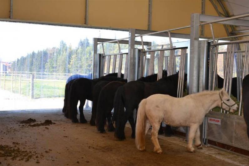 automate pour nourrir les chevaux en écurie active