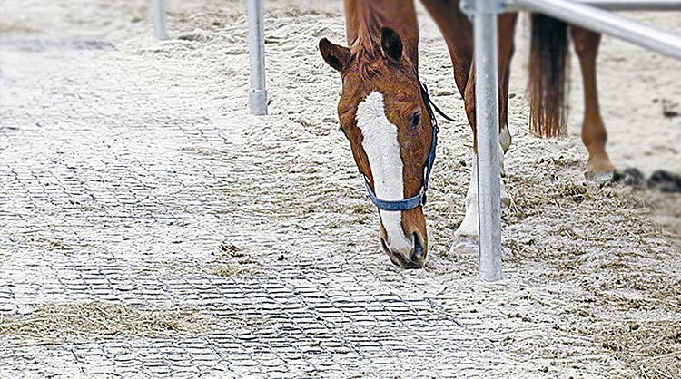 Cheval qui se détend au paddock. Sol propre et pieds sains grâce aux dalles ECORASTER.
