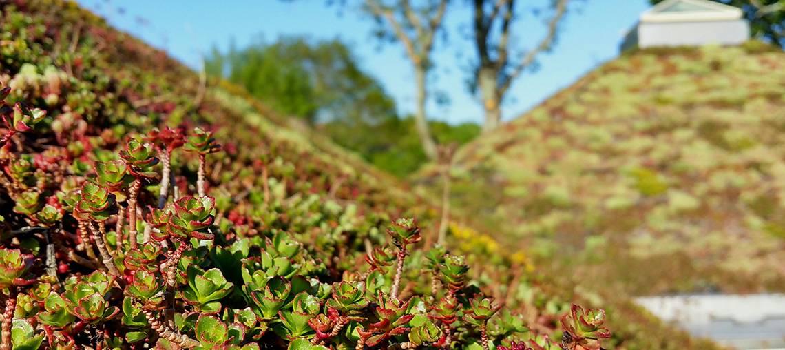ECOVEGETAL : les actualités des toits végétaux et parkings perméables