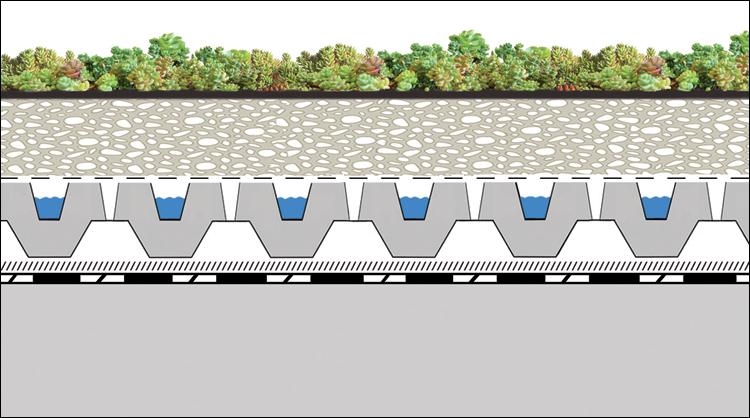 Ecovegetal Un Systeme De Vegetalisation Extensive Simple