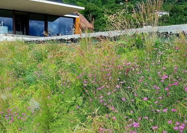 Végétalisation en pente au lac du Bourget (73)