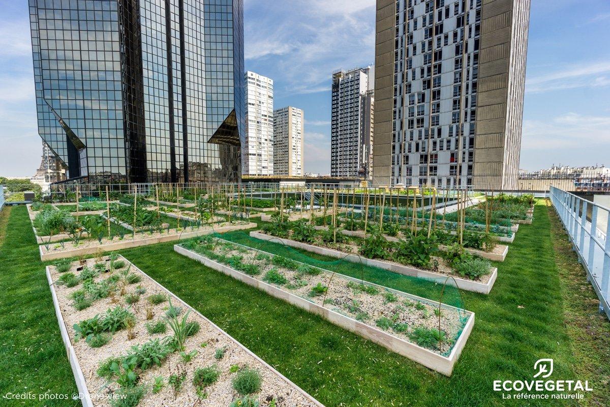exemple de potager urbain sur toiture végétalisée à Paris