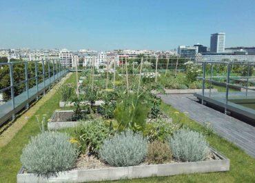 Comment votre toiture végétalisée va évoluer – végétalisation semi-intensive