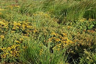 Qu'est-ce qu'une plante herbacée - définition