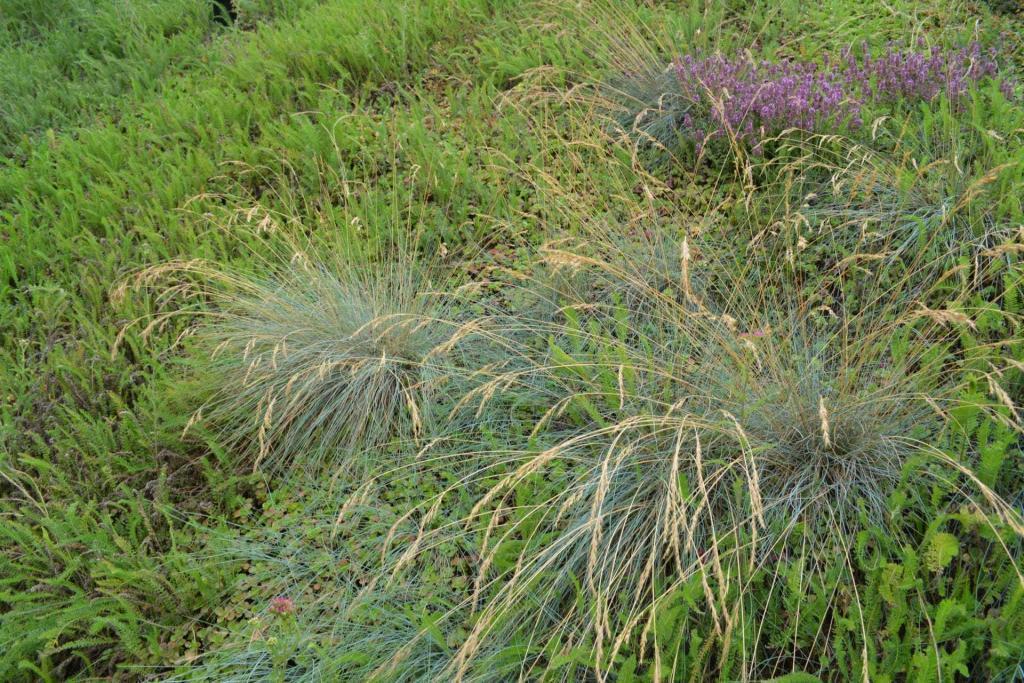 Qu'est-ce qu'une plante graminée Ecovegetal