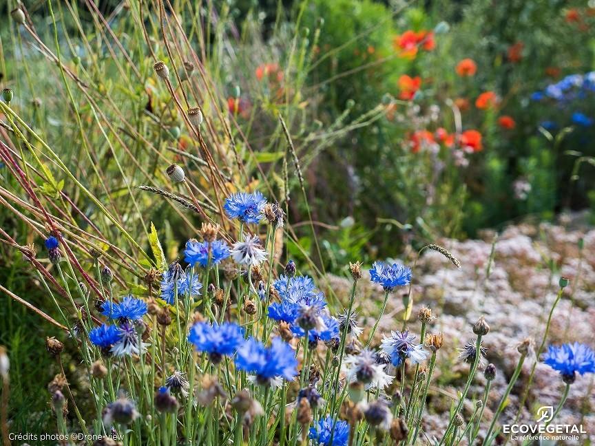 Toit végétalisé prairie fleurie saxatilis ECOVEGETAL