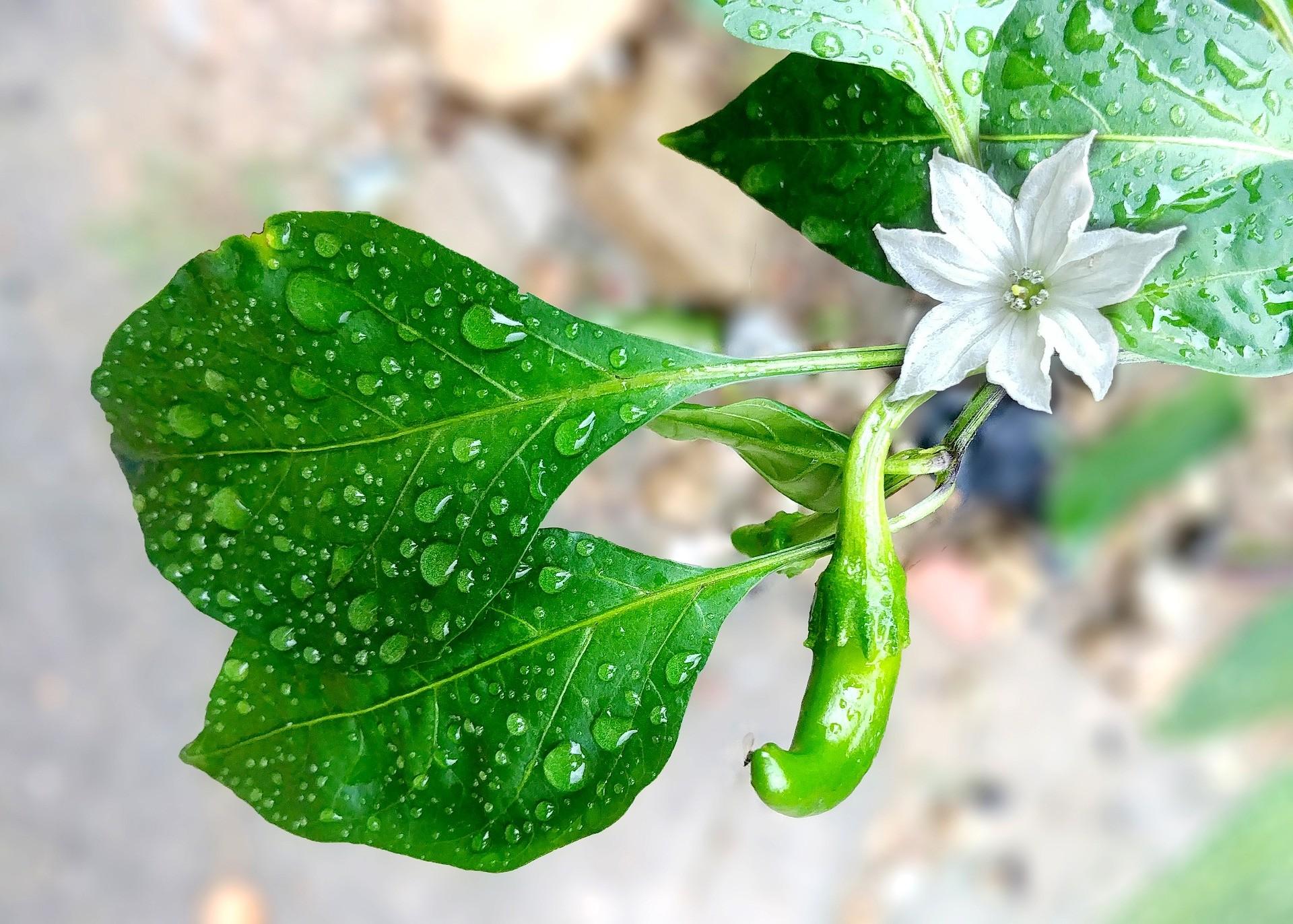 Plantes Pour Talus Sec définition : qu'est-ce que l'évapotranspiration ? - ecovegetal