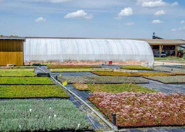 Sedum sur un toit végétal: est-il vraiment incontournable ?