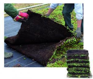 Installation facile avantage toit végétalisé