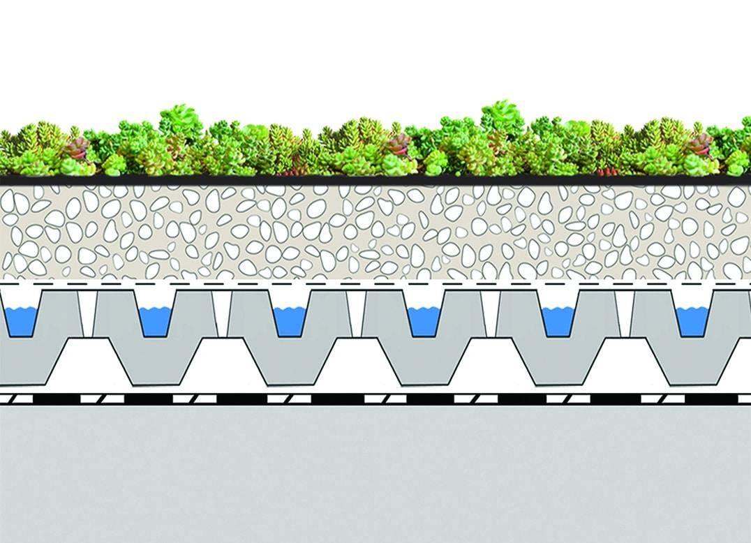coupe toiture terrasse végétalisée 1 succulis fs40