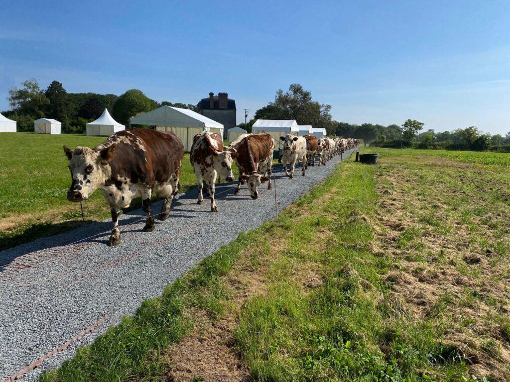 stabilisation chemin agricole