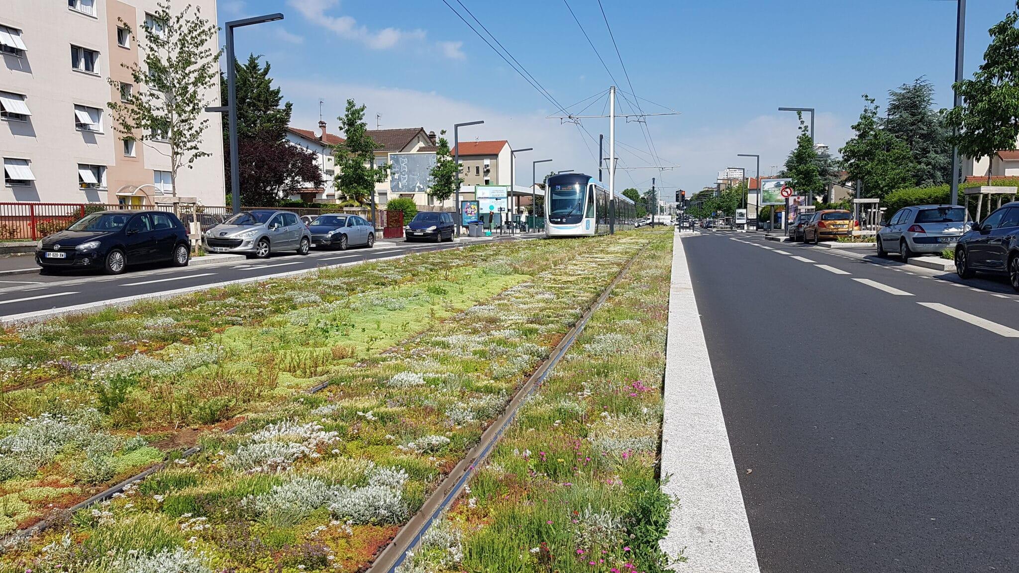 zéro phyto voie de tram sédum